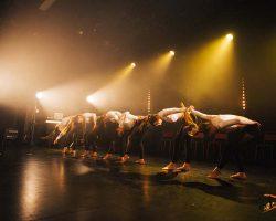 Carnaval-Salsa-Festival-Limoges-2018–show486-1